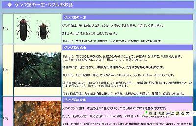 hotarunoissyou01.jpg