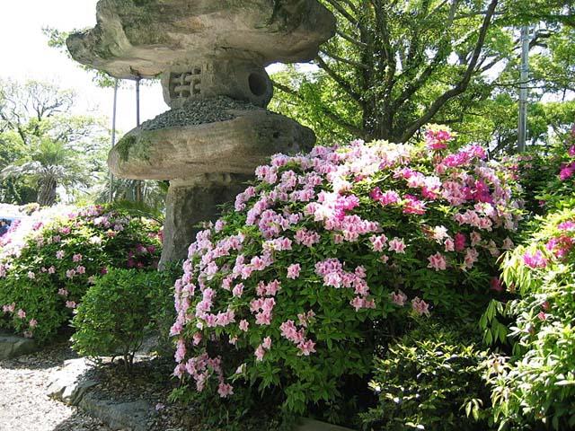 宮地岳神社のツツジ