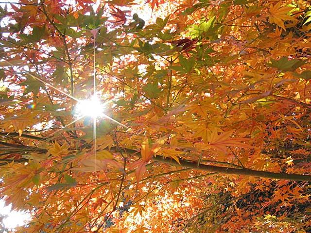 八所宮の紅葉