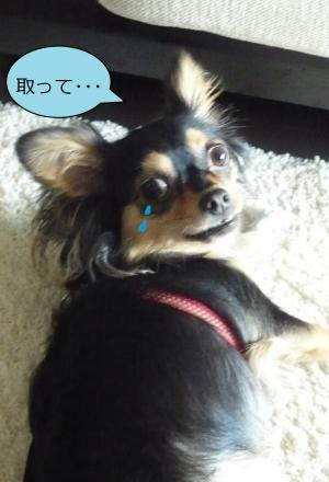 縺ィ縺」縺ヲ_convert_20090625142326
