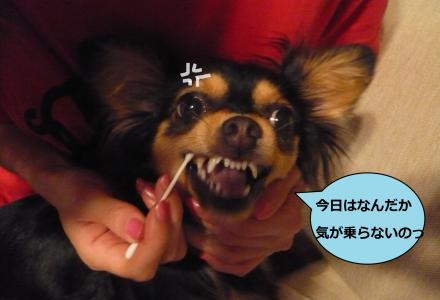莉頑律縺ッ_convert_20090629210455