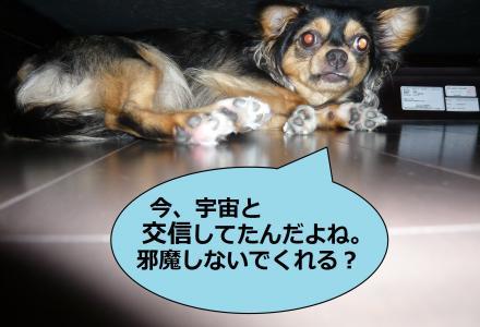 縺・∪_convert_20090810185725