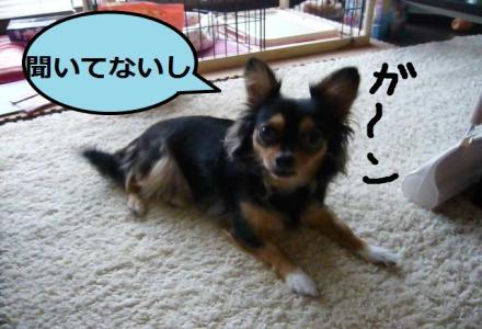 閨槭¥_convert_20090812012455