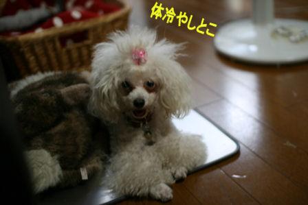 IMG_6701b.jpg