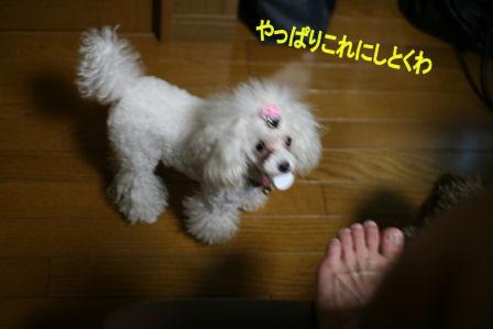 IMG_6753b.jpg