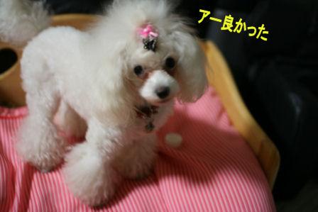 IMG_6762b.jpg