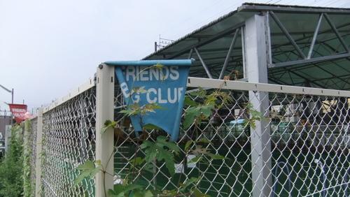 SDJフレンズドッククラブ
