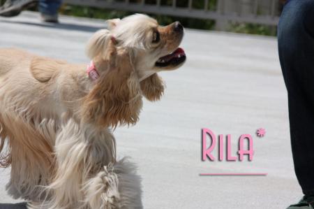 RILA_1.jpg