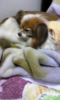 Sleeping Squeak
