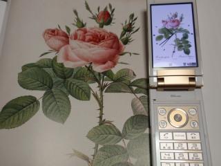 20090729-224005.jpg