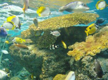 新潟の水族館1