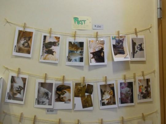 福猫茶房47