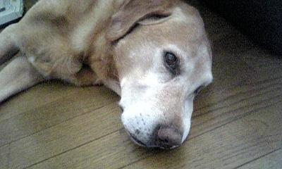 つる吉 2009.7.14 3