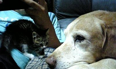 2009.8 つる 猫
