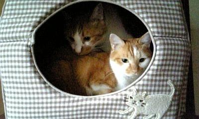 2009.9.15 猫4