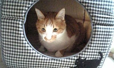 2009.9.15猫