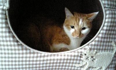 2009.9.15 猫2