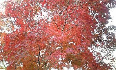 2009.11.26 紅葉