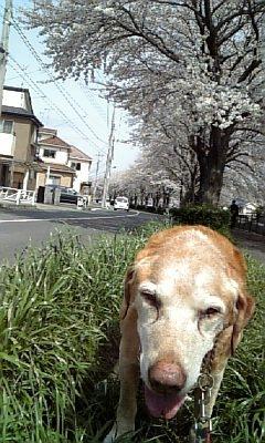 2010.4.6 つる吉