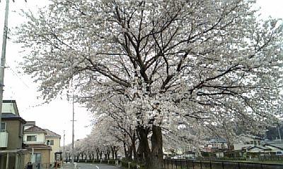 2010.4.4 桜2