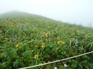 写真ではねぇ。雑草に見えるかもしれませんが......