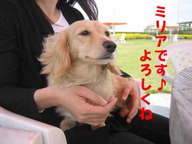 IMG_0735m.jpg