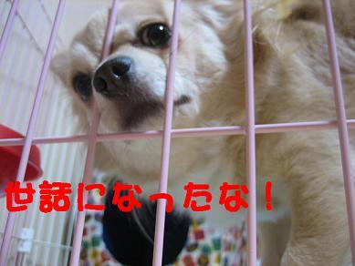 IMG_8422d.jpg