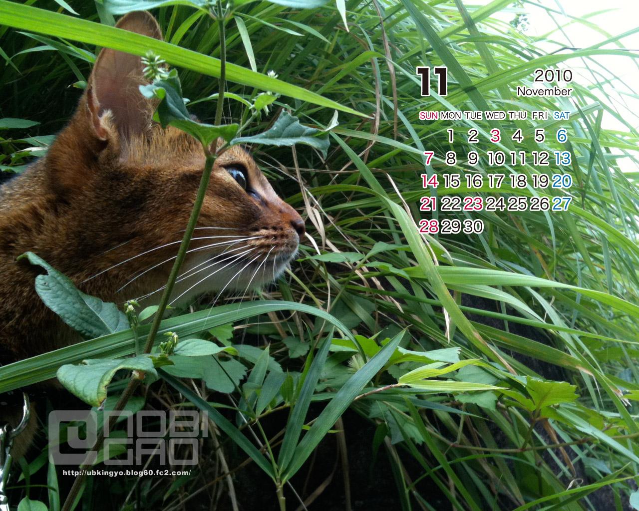 11月猫壁紙カレンダー