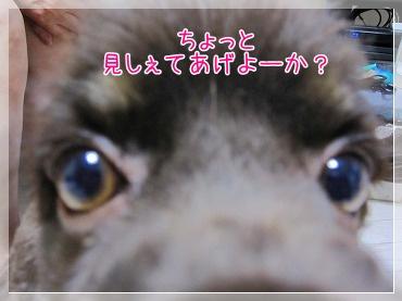 20090615(2).jpg
