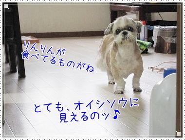 20090622(5).jpg