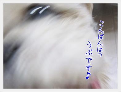 20090623(6).jpg