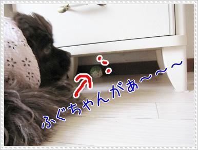 20090731(3).jpg