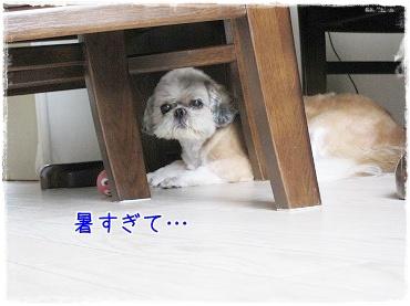 20090811(2).jpg