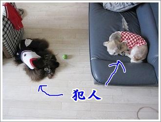 20090825(5).jpg
