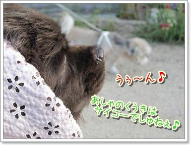 20090908(5).jpg