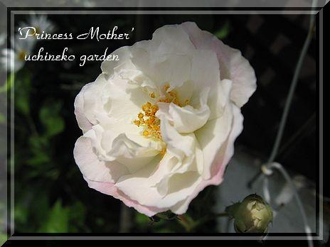 プリンセスマザー