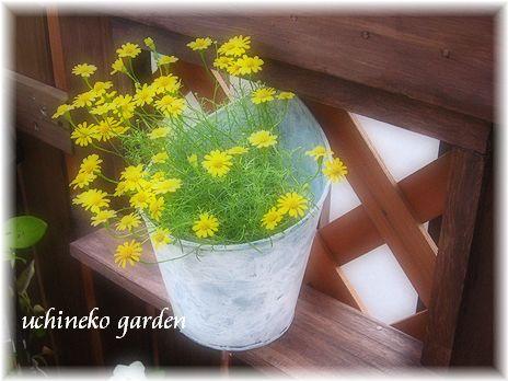 小窓に花♪