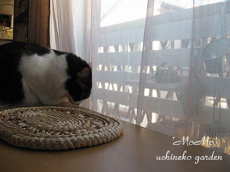 窓辺のMOMO