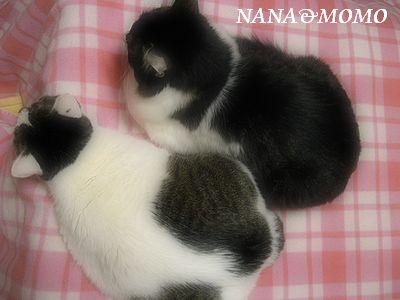 NANA&MOMO