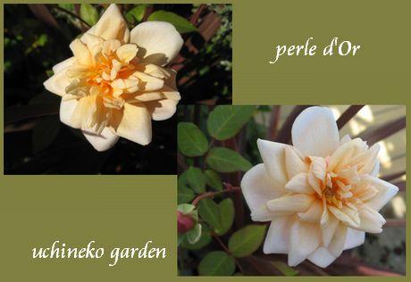 ペルルドール 花