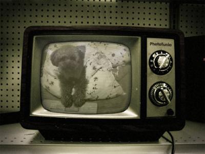 シャルテレビ