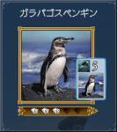 ガラパゴスペンギン