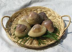 九十九里 名物 海 ハマグリ 焼き蛤