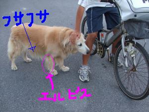 DSCF2123_convert_20090529101318zzz.jpg