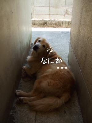 DSCF2744(1)_convert_20090606233104.jpg