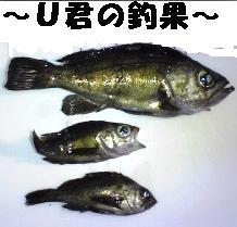 Image140_20081228121219.jpg