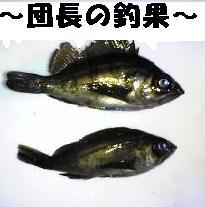 Image141_20081228121224.jpg