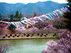 2010_0409sakura0022_convert_20100411152241.jpg