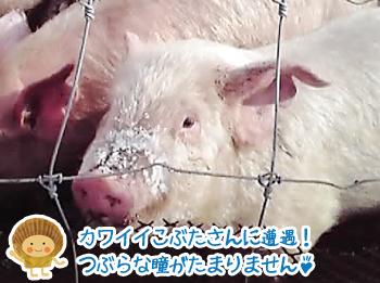 obihiro08.jpg