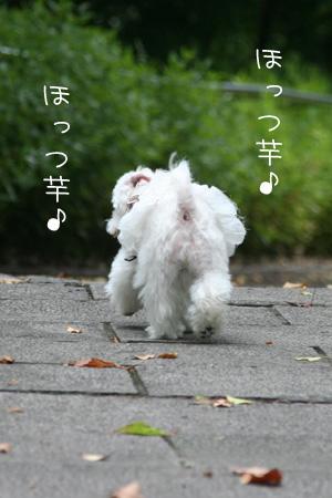 8_17_5157.jpg